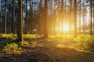 Softwarelösung für Forstbetriebsgemeinschaften