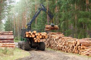 Private und Kommunale Waldbesitzer