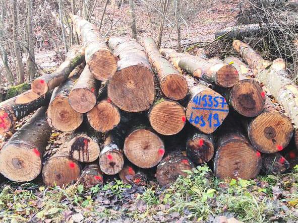Brennholz Verkauf TimberTom